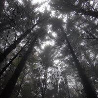 Crown Of Twilight-Radiance