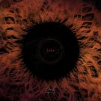 Owl Company-Iris