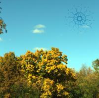 Oaks Of Bethel-The Spirit Molecule II