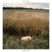 Sinai Vessel-Brokenlegged