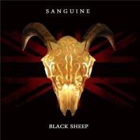 Sanguine-Black Sheep