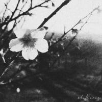 Nattgast / A Rose Dying In The Rain / Sdughalt / Faith / No... / June Sky / Sorrowful Life / Depersonalization-White Iris (Split)