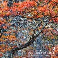 Aymuraykilla-La Ilusión De Un Bosque Rojo