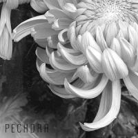 Pechora-Чужой Среди Безликих