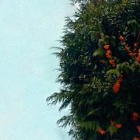 In Autumnus-Intrusiveless