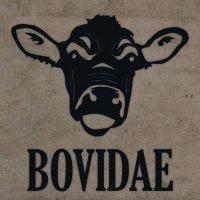 Bovidae-Bovidae