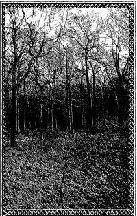 Forest Grave / Ostots-Split II