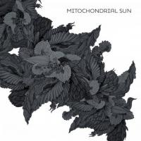 Mitochondrial Sun-Mitochondrial Sun