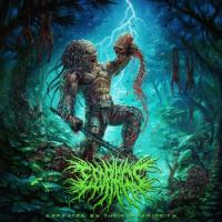 Esophagus-Defeated by Their Inferiority