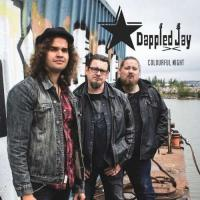 Dappled Jay-Colourful Night