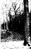 Forest Grave-Spring Rehearsal
