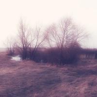 Skogen Tok Sjelen Min-Calm Dreams