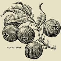 30 Seconds For Scum-Blackthorn
